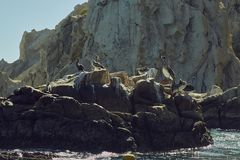 Sea Lions Off Baja California ,México stock images