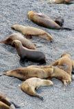 Sea lion beach Stock Image