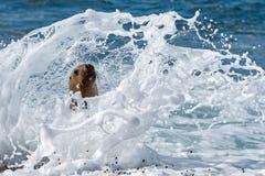 Sea lion on the beach Stock Photography