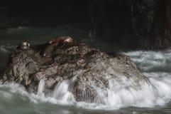 Sea Lion Cave Stock Photos