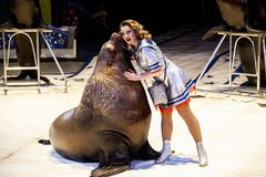 Sea lion in the circus. The tamer and the sea lion are performing in the circus arena. Royalty Free Stock Images