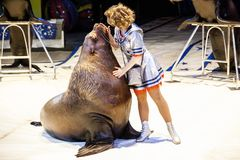 Sea lion in the circus. The tamer and the sea lion are performing in the circus arena. Royalty Free Stock Image