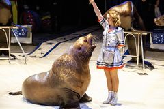 Sea lion in the circus. The tamer and the sea lion are performing in the circus arena. Royalty Free Stock Photography