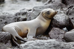 Sea lion colony Stock Photo
