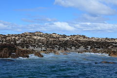 Sea lion colony at Cape Town in South Africa Royalty Free Stock Photography