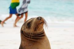 Sea Lion, Galapagos. Royalty Free Stock Image