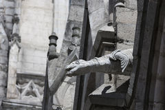 Sea Lion gargoyle on the Basilica del Voto Nacional Royalty Free Stock Photos