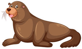 Sea lion with happy face Royalty Free Stock Photography
