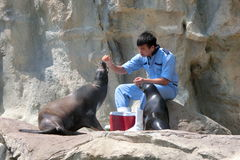 A sea lion having breakfast at Pacific Pier at Ocean Park Stock Photo