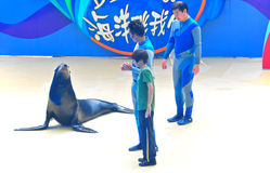 Sea lion and instructors. A scene from the delightful show with a sea lion and instructors at the ocean park hong kong Stock Images