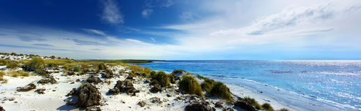 Sea Lion Island Coastline Royalty Free Stock Images