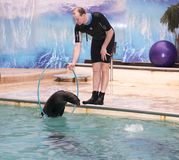 Sea lion jumping through a hoop in the hands of the trainer Stock Photos