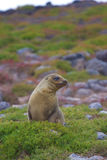 Sea lion landscape. A sea lion in some brush in the Galapagos Stock Photo