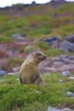 Sea lion landscape Stock Photo