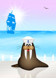 Sea lion marine Royalty Free Stock Photo