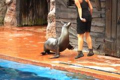 Sea lion performance Royalty Free Stock Photos
