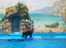 Sea lion performance. A cute sea lion performing a show Stock Images