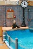 Sea lion performing at Sea World Royalty Free Stock Image