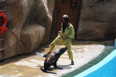 Sea Lion Performing At Zoomarine Royalty Free Stock Photo