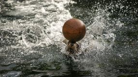 Sea lion playing with ball Stock Photos