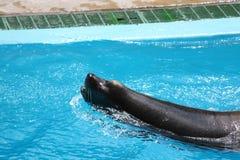 Sea Lion Profile stock photo