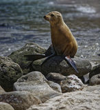 Sea lion relaxing stock photo