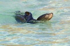 Sea Lion Stock Photos