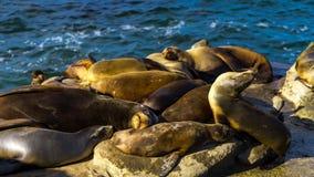Sea lion resting on cliffs. San Diego, California, near La Jolla. Beach Royalty Free Stock Photography