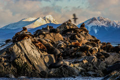 Sea Lion Rock Stock Images