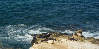 Sea Lion Rock. Sea Lions sun bathing on a rocky cliffside along the pacific coast Royalty Free Stock Image