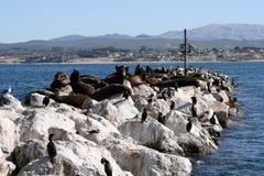 Sea Lion Rocks royalty free stock photography