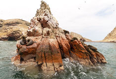 Sea lion on rocky formation Islas Ballestas, paracas Royalty Free Stock Image
