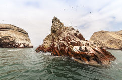 Sea lion on rocky formation Islas Ballestas, paracas Royalty Free Stock Images