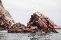 Sea lion on rocky formation Islas Ballestas, paracas Royalty Free Stock Photos