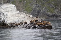 The sea lion rookery. Islands in the Pacific ocean near the coas Stock Images