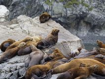 The sea lion rookery. Islands in the Pacific ocean near the coas Stock Photo