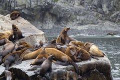 The sea lion rookery. Islands in the Pacific ocean near the coas Stock Photos