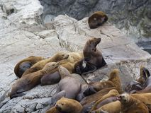 The sea lion rookery. Islands in the Pacific ocean near the coas Royalty Free Stock Images