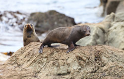 Sea Lion's life Stock Image