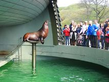 Sea lion in Sea museum, Lithuania Royalty Free Stock Images