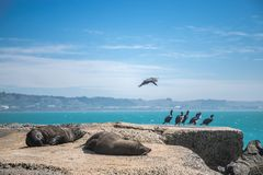 Sea lion, seal in the wild. On natural background, new zealand nature Stock Image