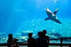 Free Sea Lion Show In An Aquarium, Zoo, Nuremberg, Germany Stock Photography - 123229802