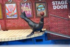 Sea Lion Show, SeaWorld, San diego, California Stock Photo