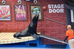 Sea Lion Show, SeaWorld, San diego, California Royalty Free Stock Photography