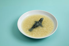 Sea lion soup Royalty Free Stock Image