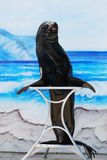Sea lion on stand Royalty Free Stock Photo