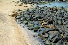 Sea lion sunbathing in san cristobal galapagos Stock Image