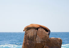 Sea Lion sunning and lounging on Pinnacle rock at Lands End at Cabo San Lucas Baja California Mexico Stock Photography
