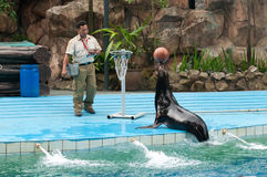 Sea lion and trainer stock photography