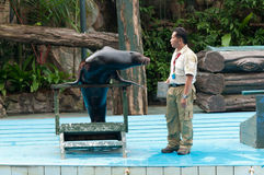 Sea lion and trainer Stock Photos